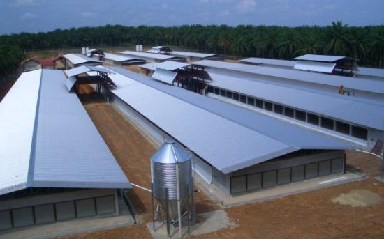 Farm - Yong Peng